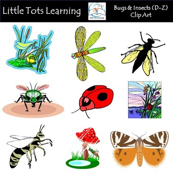 Bugs insects clip art. Beetle clipart little bug
