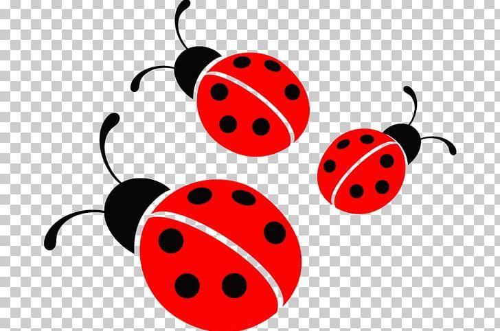 Ladybird ladybugs png animal. Beetle clipart little bug
