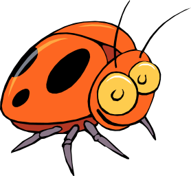 Beetle orange bug