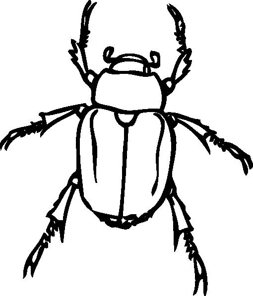 Beetle clipart outline. Clip art at clker