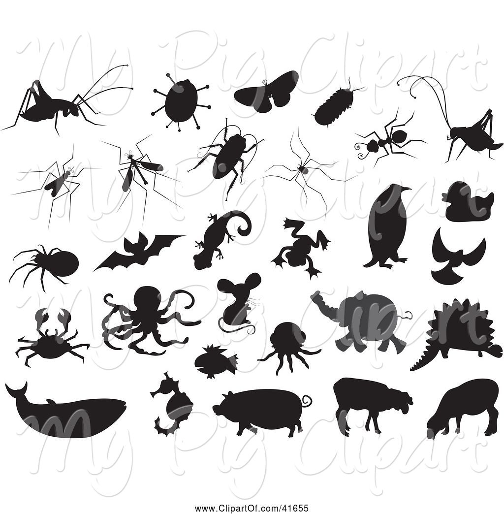 Swine of black and. Bug clipart silhouette