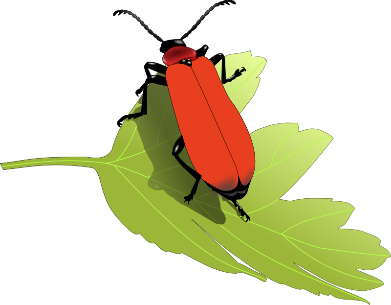 Insect panda free images. Firefly clipart green bug