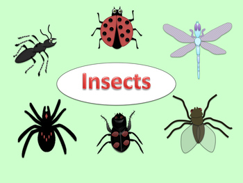 Free insect clip art. Flies clipart beetle