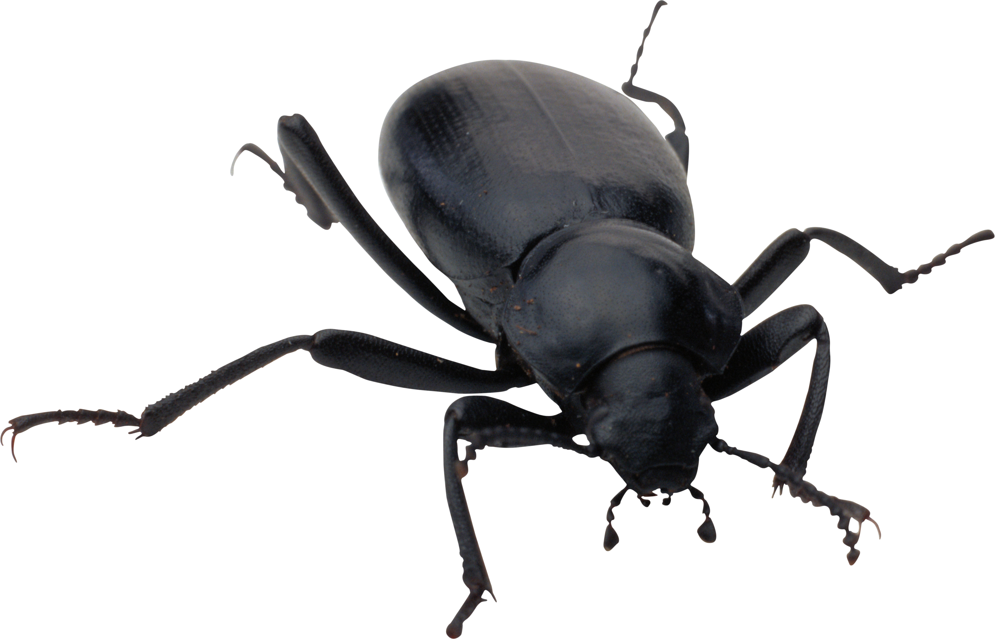Insect beetle insect