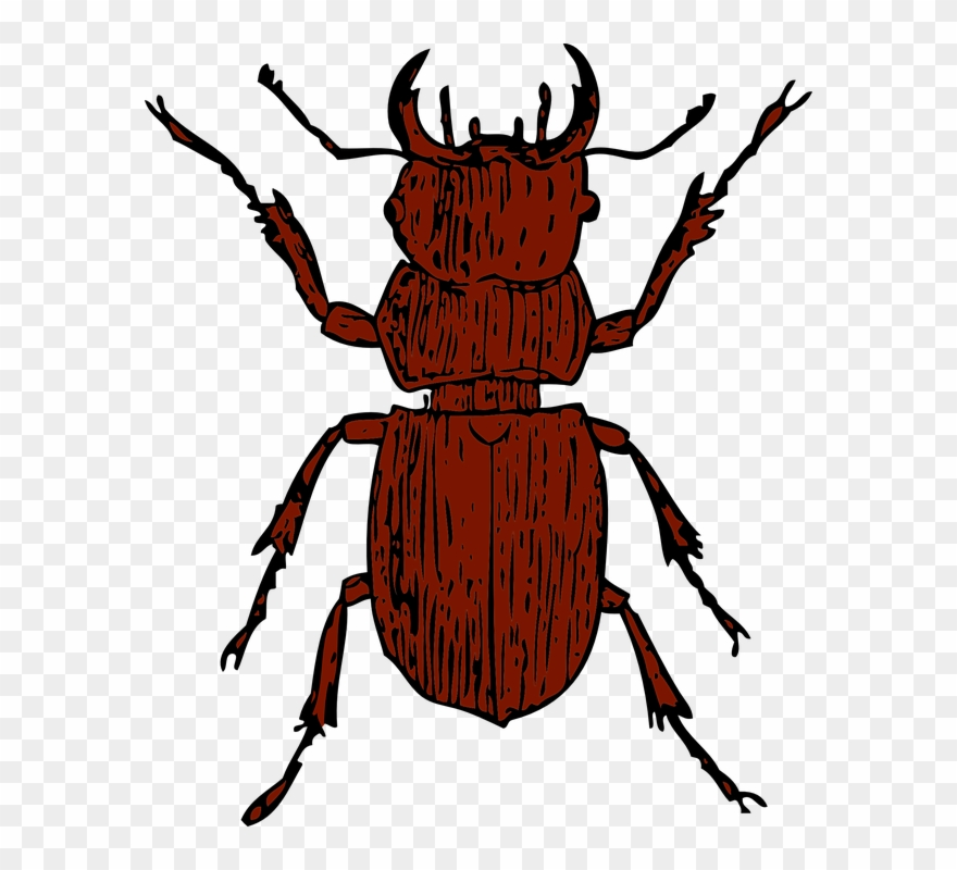 Insects clipart water beetle. Beelte stag png