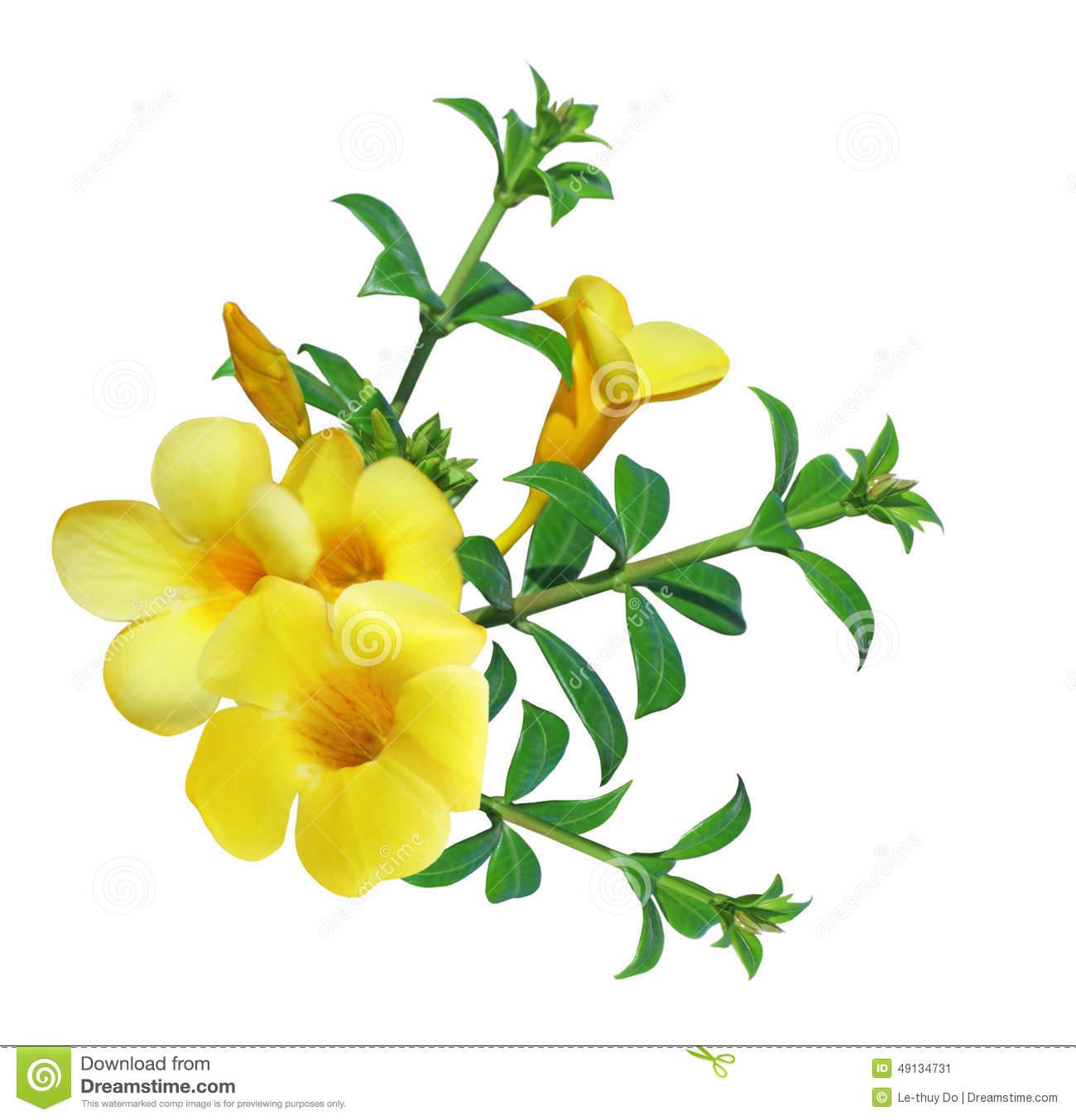 Flower . Bell clipart yellow bell