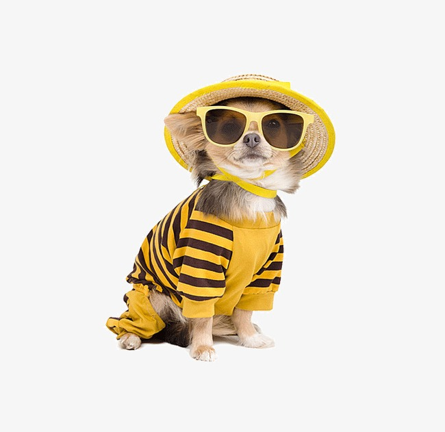 Belt clipart dog. Wore striped sunglasses other