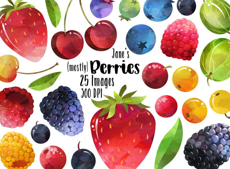 Watercolor berry download instant. Berries clipart