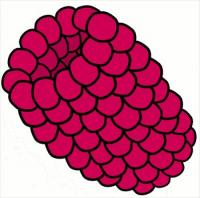 Berries clipart. Free graphics images and
