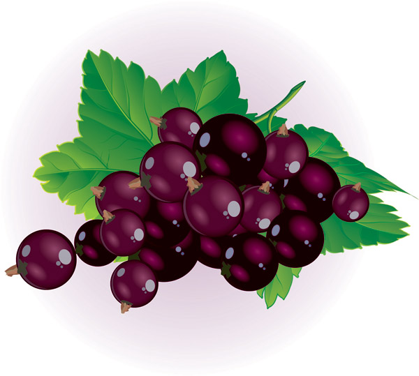 Berries clipart. Free fall cliparts download