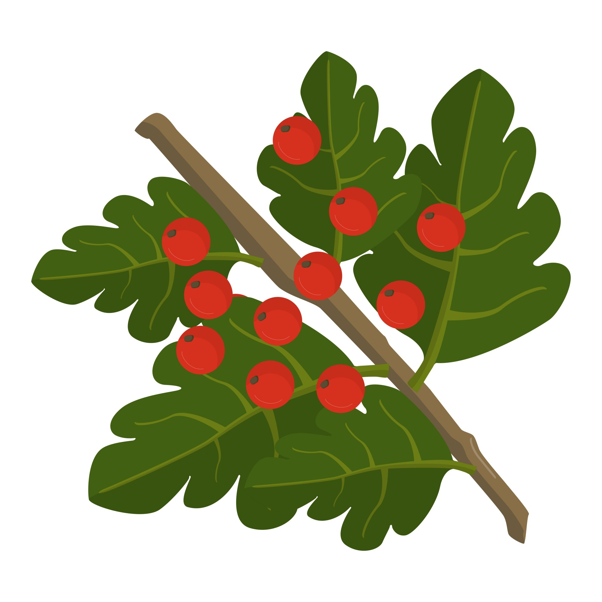Berries clipart autumn berry. Hawthorn free stock photo