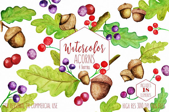 Watercolor acorns commercial use. Berries clipart autumn berry