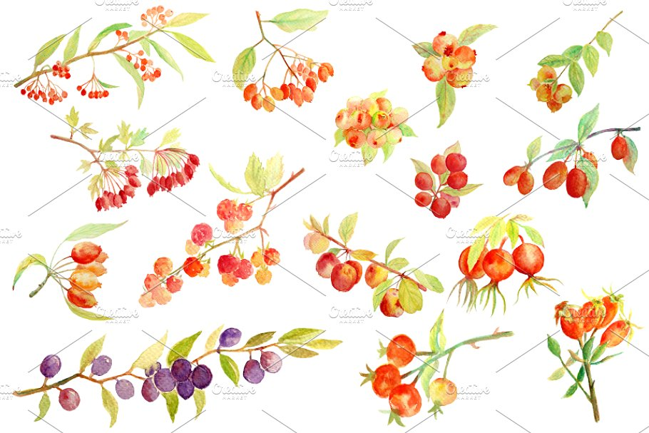 Watercolor fall . Berries clipart autumn berry