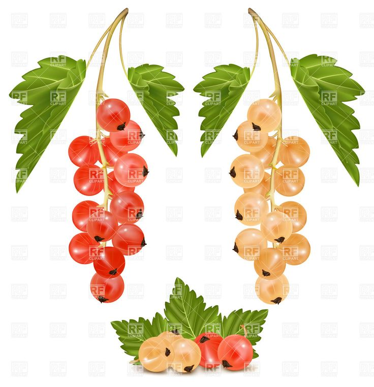 Berry clipart autumn berry.  best fall leaves