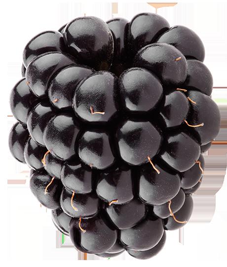 Berries clipart berrie. Home plus blackberry the