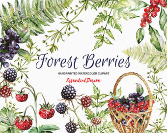 Watercolor etsy forest basket. Berries clipart berrie