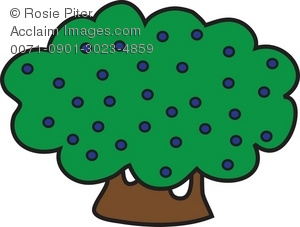 collection of berry. Berries clipart berrie
