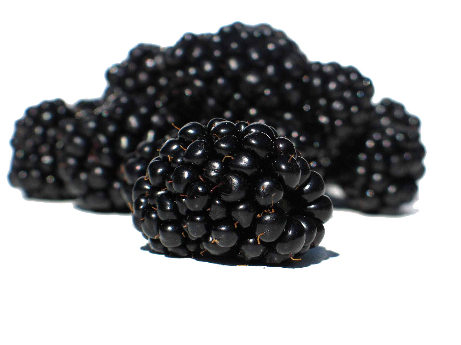 Blackberry png images free. Berries clipart berrie