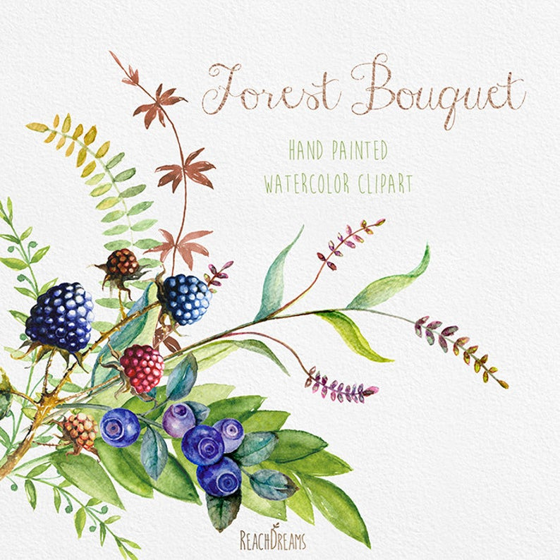 Berries clipart berrie. Watercolor hand drawn blueberry
