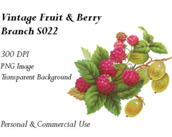 Clip art fruits and. Berries clipart berry branch