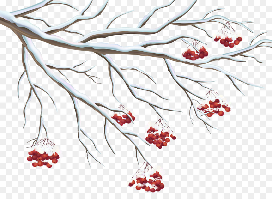 Berries clipart berry branch. Common holly clip art