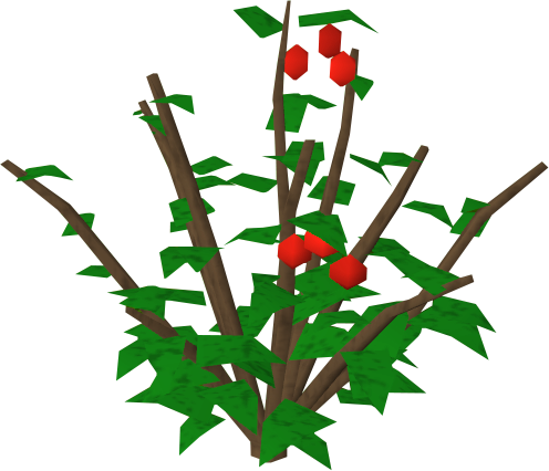 Bushes clipart raspberry. Redberry bush runescape wiki
