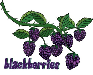 Free black cliparts download. Berries clipart berry bush
