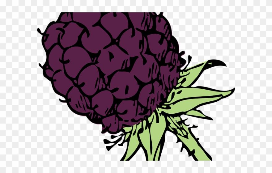 Blackberry clip art png. Berries clipart berry bush