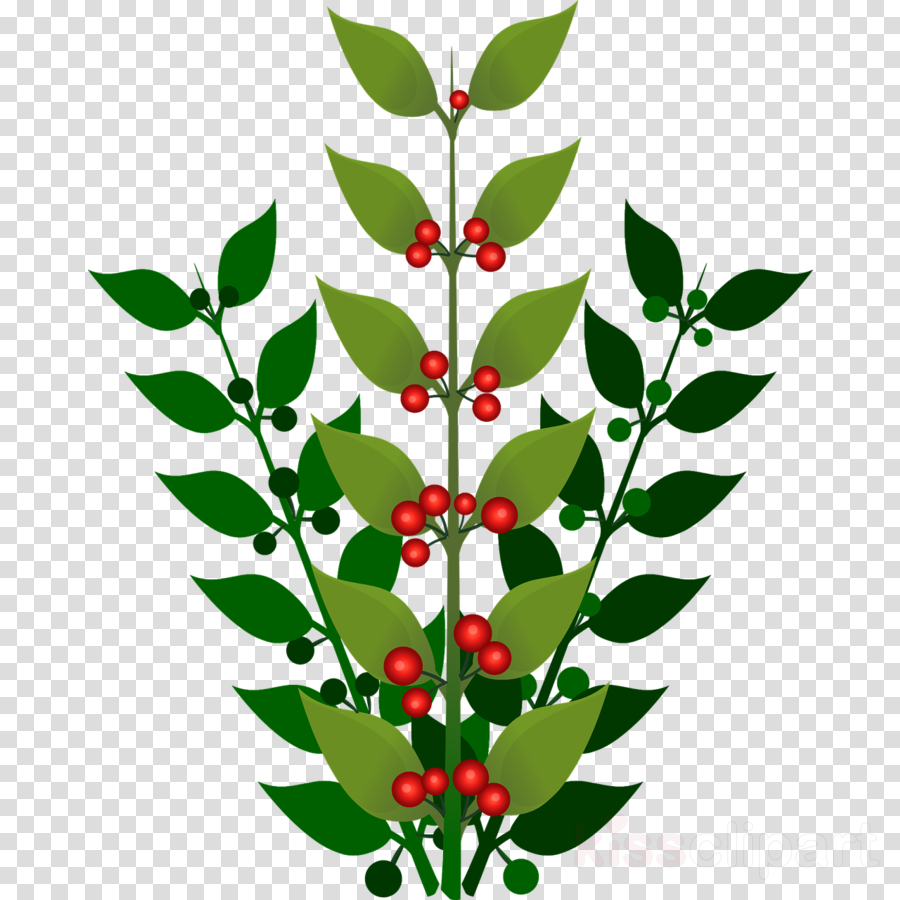 Berries clipart berry bush. Holly leaf blueberry plant