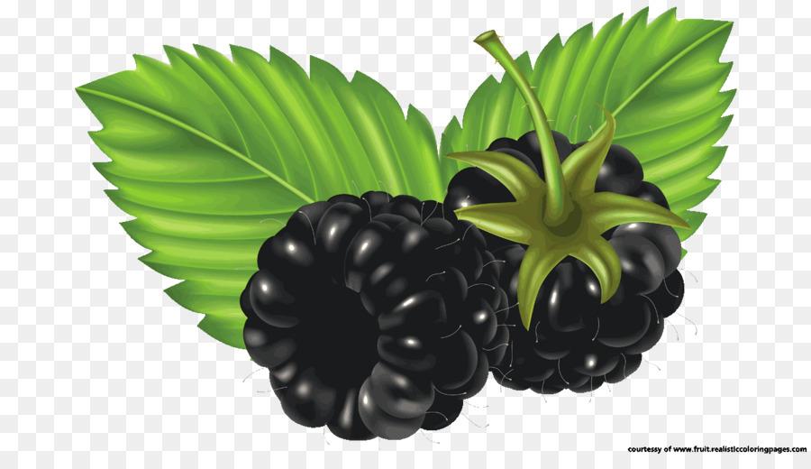 Blackberry clip art watercolor. Berries clipart berry fruit