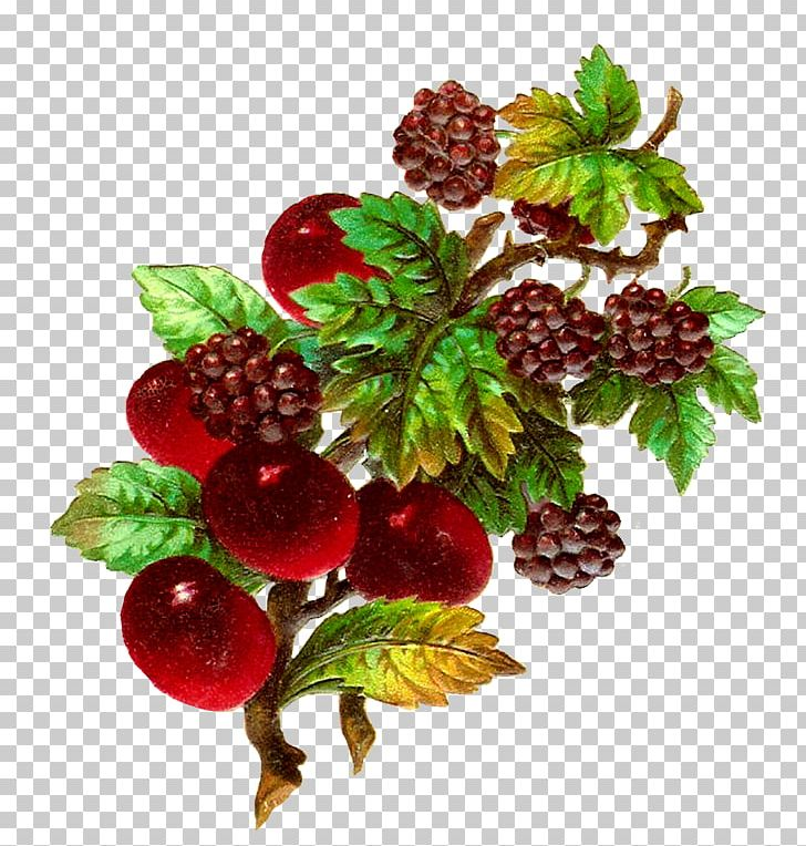 Blackberry png . Berries clipart berry fruit