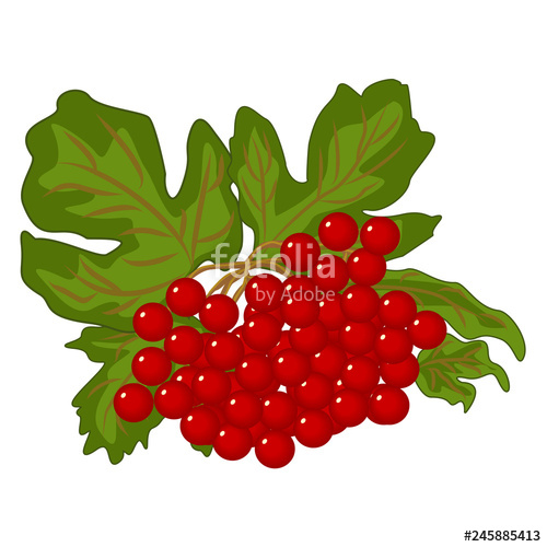 Red of viburnum with. Berries clipart berry fruit