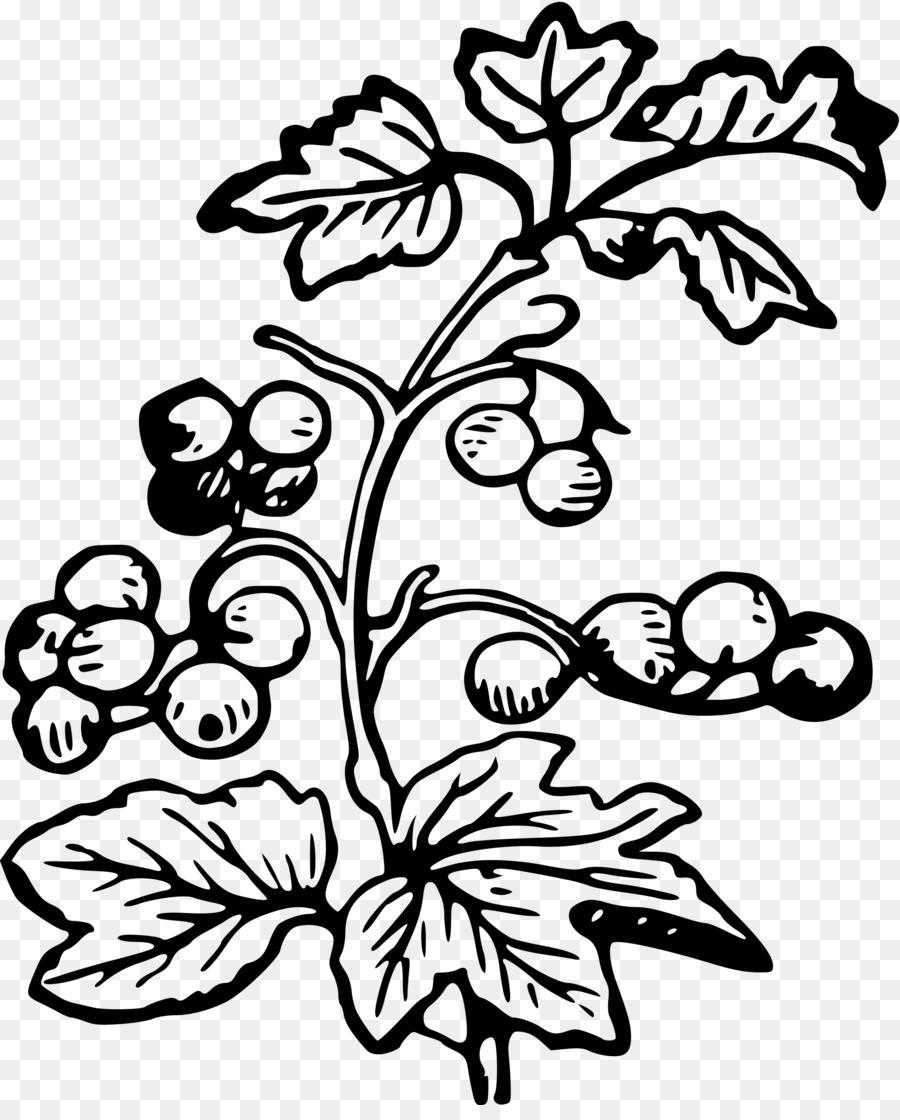 Berries clipart berry plant. Blueberry flower leaf transparent