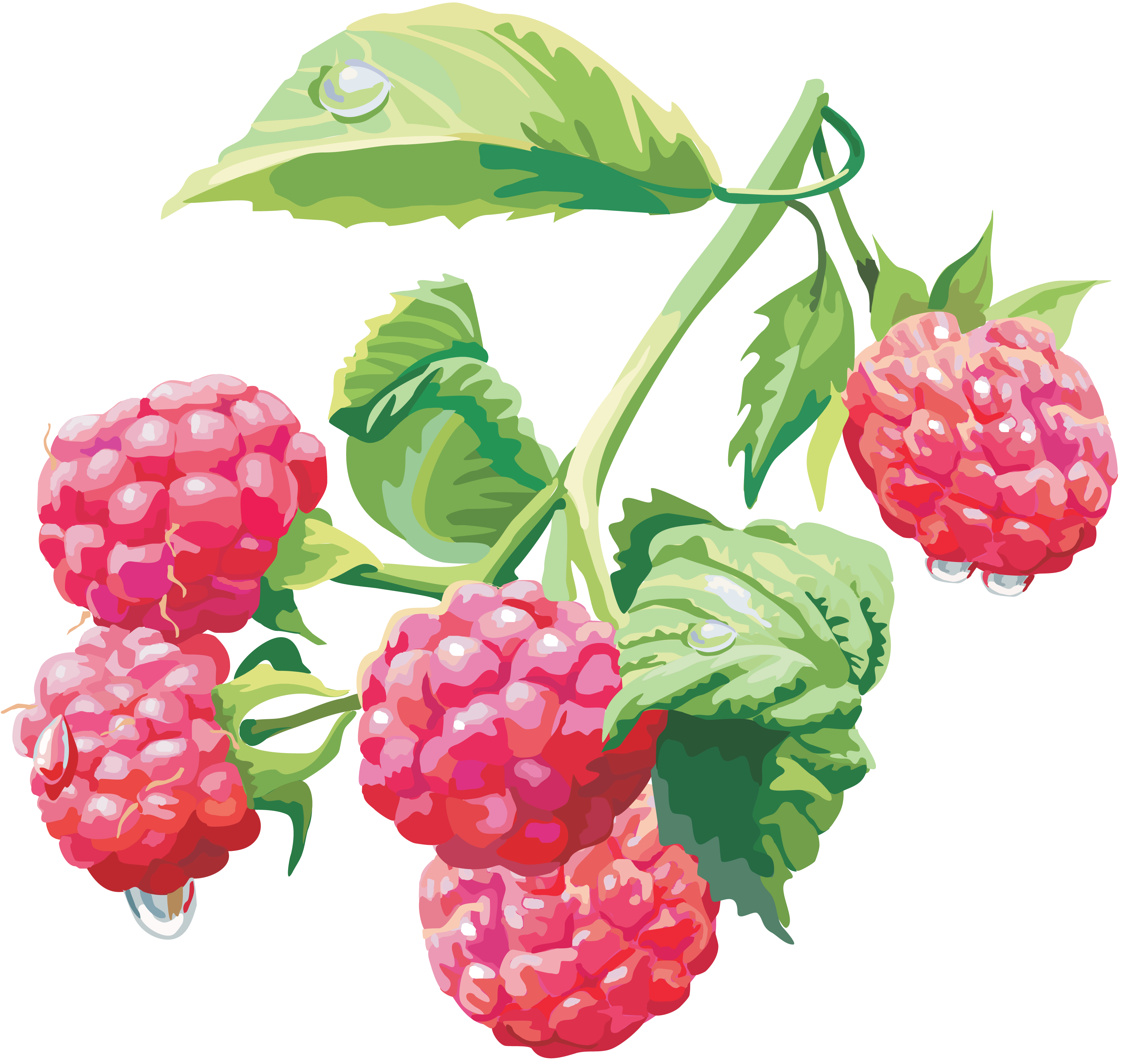 Berries clipart berry plant. Pin by hopeless on