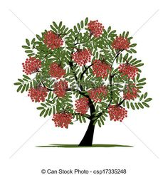 Berries clipart berry tree. Rowan with for your