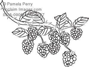 Berries clipart black and white. Clip art illustration of