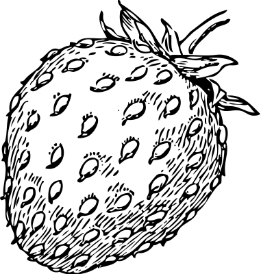 Berries clipart black and white. Free berry pages of