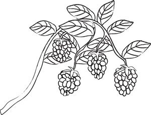 Raspberry clip art black and white