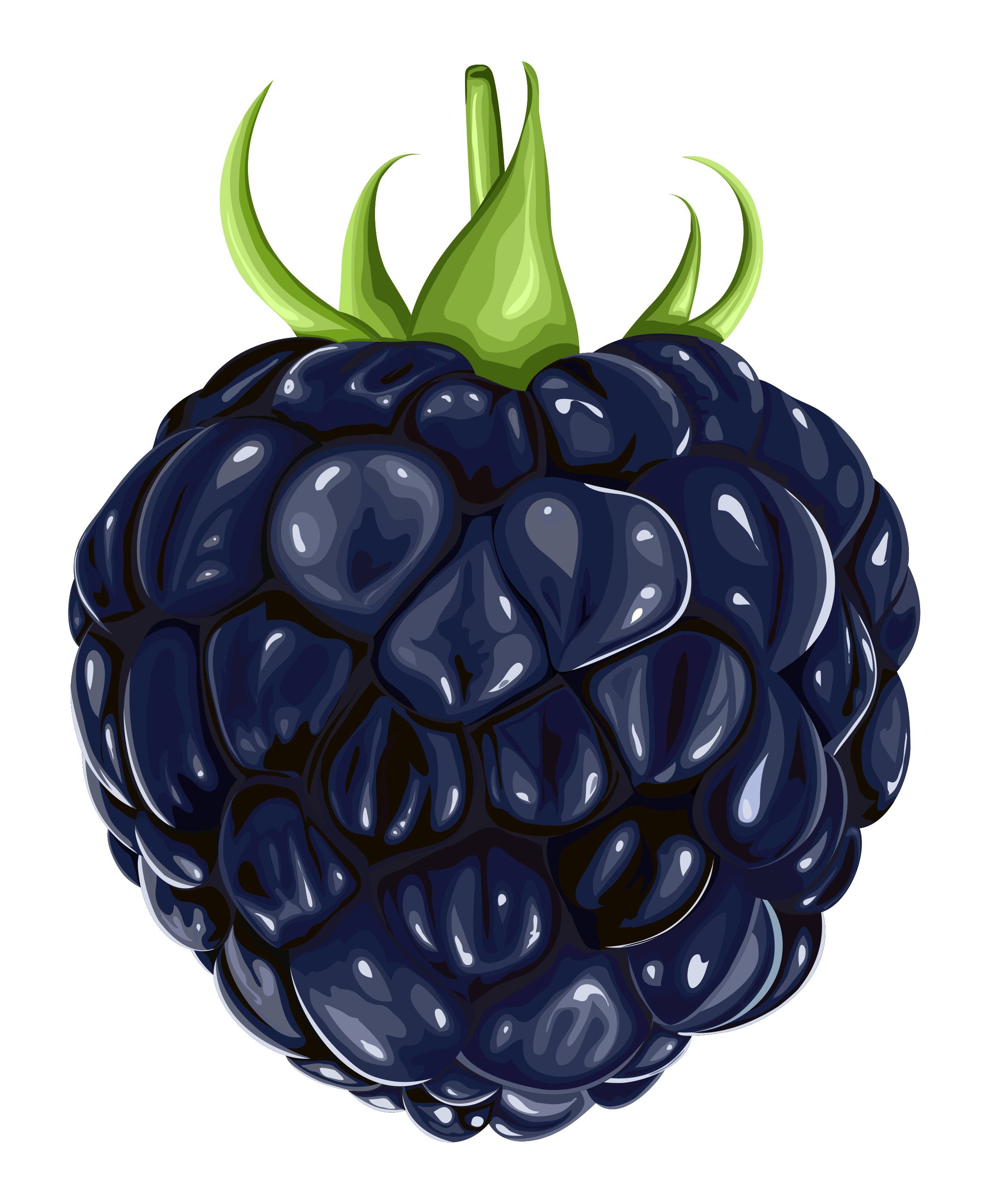Berries clipart blackberry. Fruit png gallery yopriceville