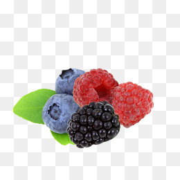 Blackberries png vectors psd. Berries clipart blackberry