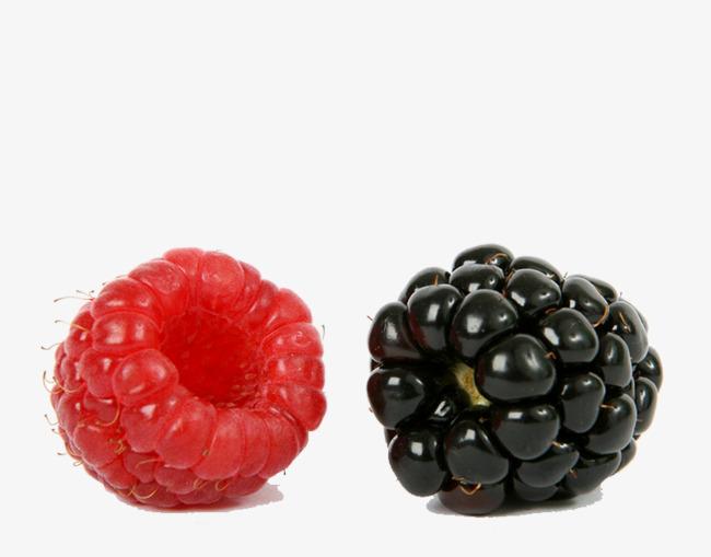 Berries clipart blackberry. Raspberry fruit blackberries png