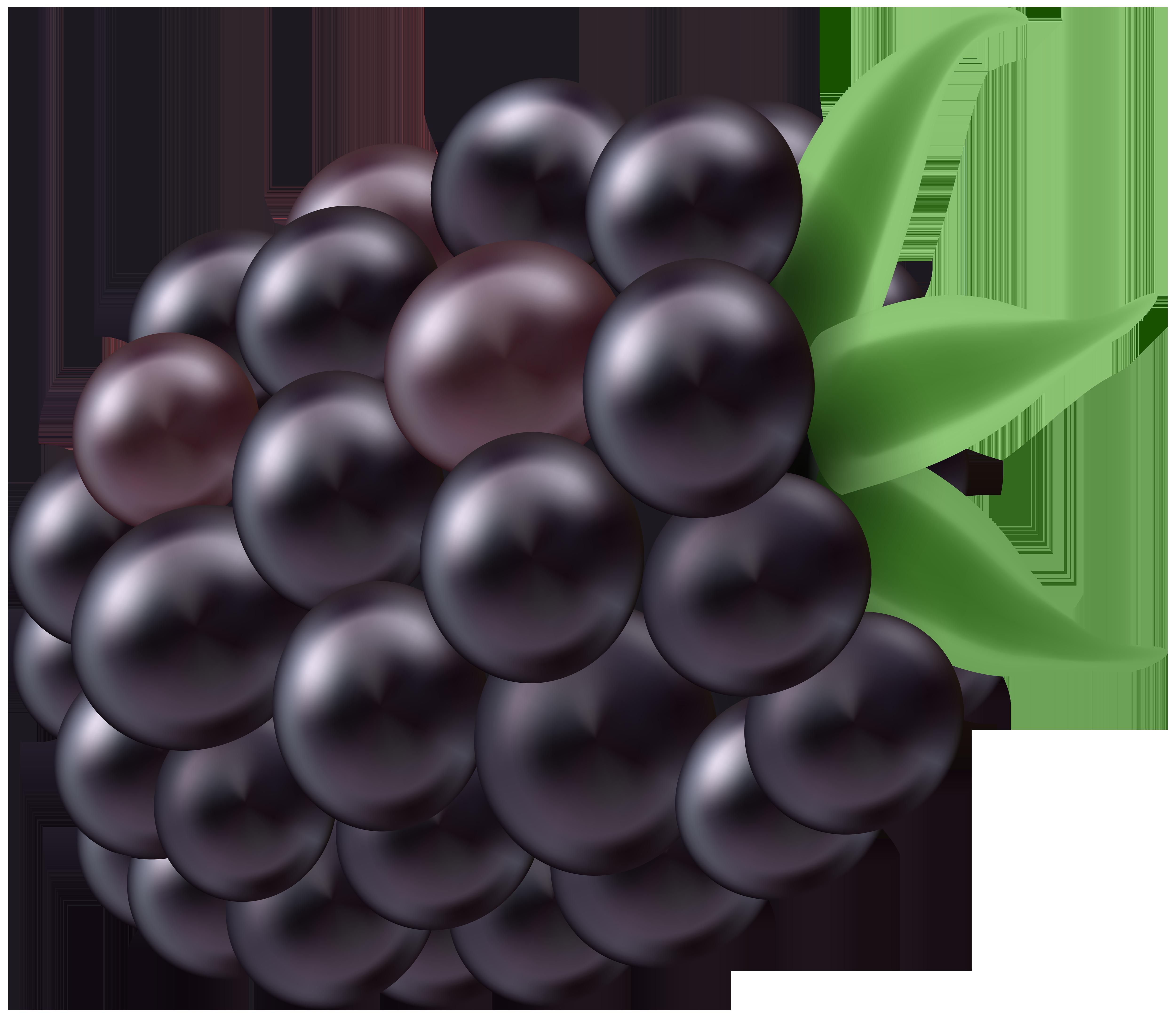 Png clip art image. Berries clipart blackberry