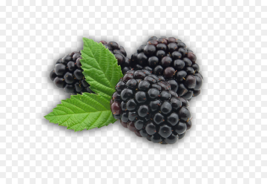 Berries clipart boysenberry. Blackberry fruit transparent png