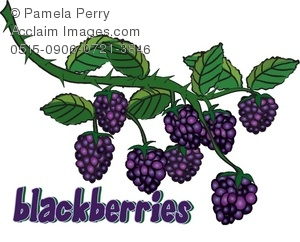 Berries clipart boysenberry. Clip art illustration of