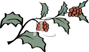 Berries clipart cartoon. Of christmas holly and