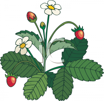 Picture of a strawberry. Berries clipart cartoon