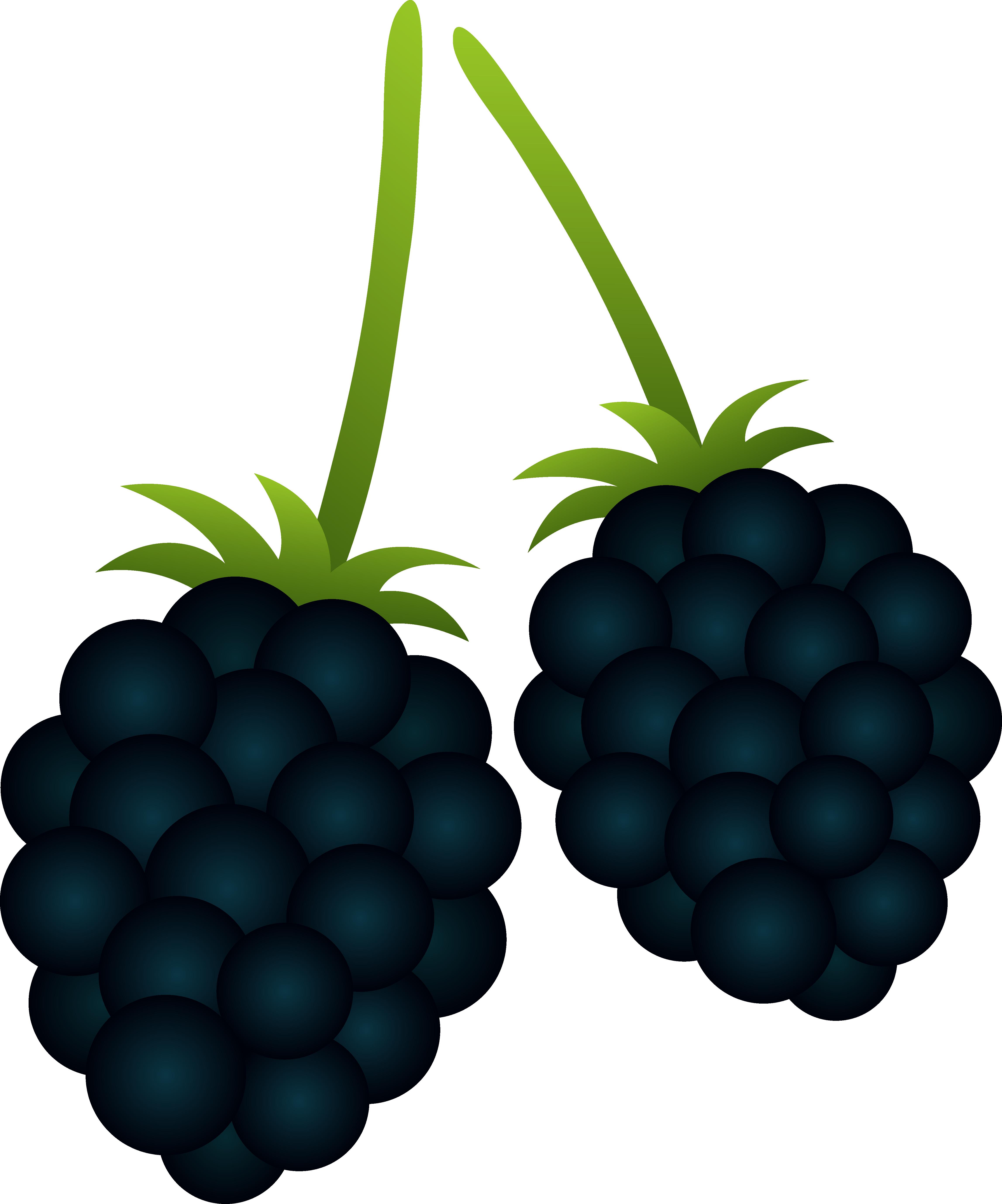 Berries clipart clip art. Marvelous berry two blackberries