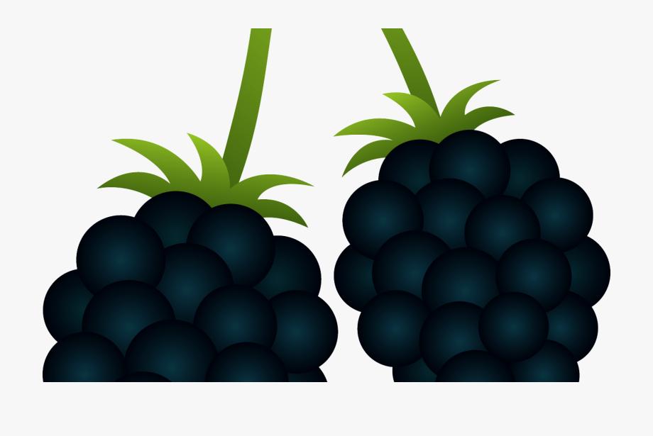 Berry blackberry bush pencil. Berries clipart clip art