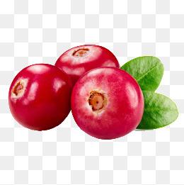 Cranberries png vectors psd. Berries clipart cranberry