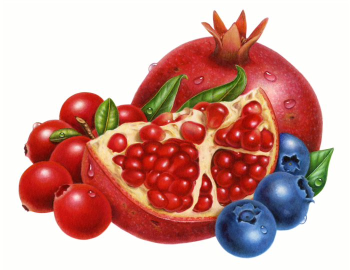 Blueberry pomegranate clip art. Berries clipart cranberry